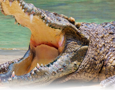 Unsure About the Taste? Delicious Recipes to Cook Crocodile Meat
